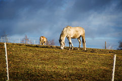 Horse rural scene Royalty Free Stock Image
