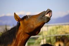 Horse's Royalty Free Stock Photos