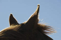 Horse's Ears Against Sky Royalty Free Stock Image