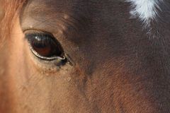 Horse's Eye Royalty Free Stock Photography