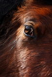 Horse's eye. Close up of horse's eye Stock Photography