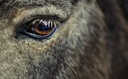Horse's eye Royalty Free Stock Images