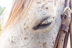 Horse's eye Stock Images