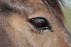 Horse's eye. Close-up of a horse's eye Royalty Free Stock Photo