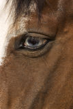 Horse's Eye. Close up photo of a Horse's Eye Stock Photos