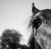Horses eye. A horses eye up close and personal Stock Photo