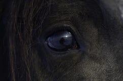 The horse`s eyes stock photos
