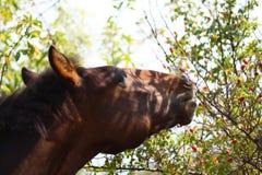Horse's face outdoors Stock Photos
