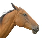 Horse's head Stock Photography