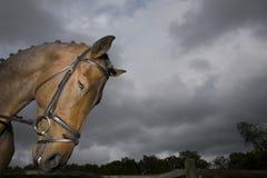 Horse's Head Against Moody Sky Stock Photo