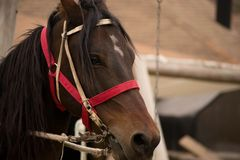 The horse`s head. royalty free stock images