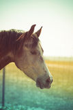 Horse's head. In front of yellowish-blue background Royalty Free Stock Photos