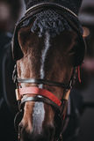 Horse`s head with muzzle Royalty Free Stock Images