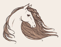 Horse's head. Tattoo sketch. Vector hand drawn illustration. Line drawing of horse with beautiful wavy mane Royalty Free Stock Photography