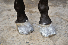 Horse's hoofs with the ointment Stock Images