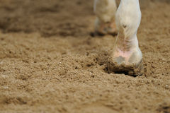 Horse's legs close up. In manege royalty free stock photo