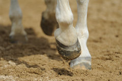 Horse's legs close up. In manege Royalty Free Stock Images