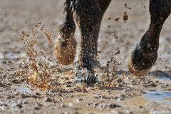 Horse's legs in the dirty water. Horse's legs in the water stock photo