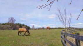 Horse& x27; s lunch zdjęcia royalty free