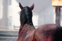 Horse's Mane and Back Stock Photos
