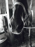 Horse`s nose stock photos