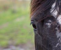 Horse& x27; s oka zakończenie up obrazy stock