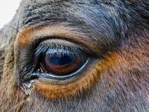 Horse&-x27; s oka zbliżenie zdjęcie stock