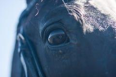 horse& x27; s oko czarny koń obraz stock