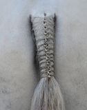 Horse's plaited tail Stock Photos