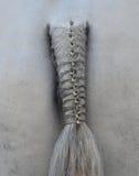 Horse's plaited tail. White Horse's plaited tail closeup Stock Photos