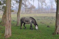 Horse in sad landscape Stock Photo
