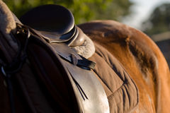Horse and saddle Royalty Free Stock Images