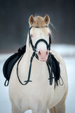 Horse with saddle and bridle in winter. Royalty Free Stock Images