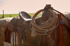 Horse with saddle in close up view royalty free stock photos