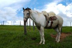Horse with saddle Royalty Free Stock Photos