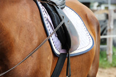 Horse with saddle. Royalty Free Stock Photography