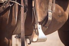 Horse with Saddle 02 Stock Image