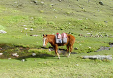 Horse with saddle on the green meadow Stock Photo
