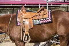 The horse with saddle. The horse with rodeo equipment for cowboys and cowgirls - leather saddle ready for riding Royalty Free Stock Photos