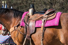 The horse with saddle Stock Photo
