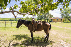 Horse with saddle tied to a tree in farm Stock Photo