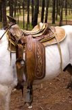 Horse Saddle on a White Horse stock photo