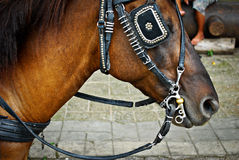 Horse Saddled and with Blinds Royalty Free Stock Photography