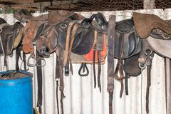 Horse saddles in barn. Row of horse saddles on wall inside farm barn or stables royalty free stock images