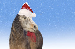 Horse. Saint Nicholas cap. Christmas Royalty Free Stock Photo