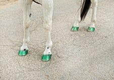 Horse in the Saint Patricks Day parade Stock Photo