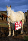 Horse For Sale. White horse standing in pasture with a for sale sign next to it royalty free stock photos
