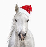Horse with santa hat on white background Stock Images