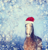Horse with Santa hat on winter snowflakes Christmas background Royalty Free Stock Image