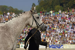 Horse scene, Marbach Stallion Parade Stock Photography